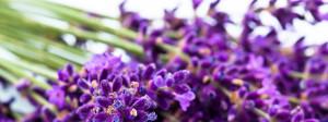 cropped-lavendel_rgb.jpg